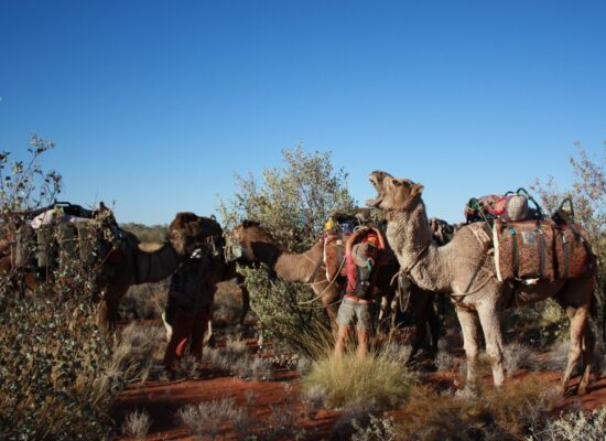 Camel Expedition in Australia