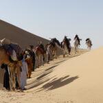 Kamelkarawane in der Sahara overlanding 4x4 Algerien 4x4 off the beaten track Outback Expeditions