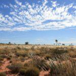 Spinnifex Gras und Buschland