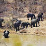 Elefanten Herde in Nationalpark im Senegal