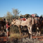 A troop of cameliers we met during our Canning Stock Route Expedition guided by Markus Linse on an Outback Expedition